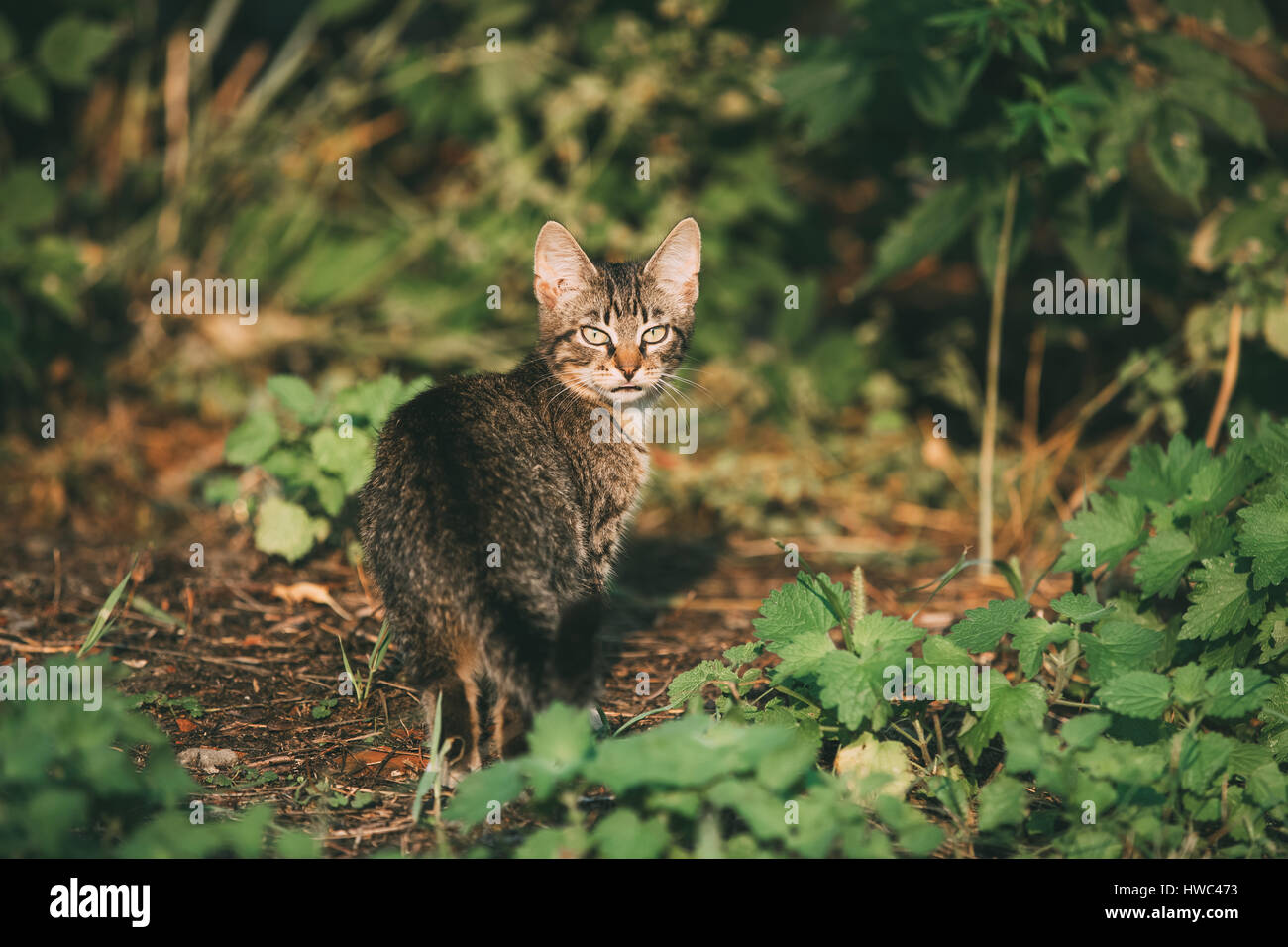 Kitten Hunting Imágenes De Stock & Kitten Hunting Fotos De Stock - Alamy