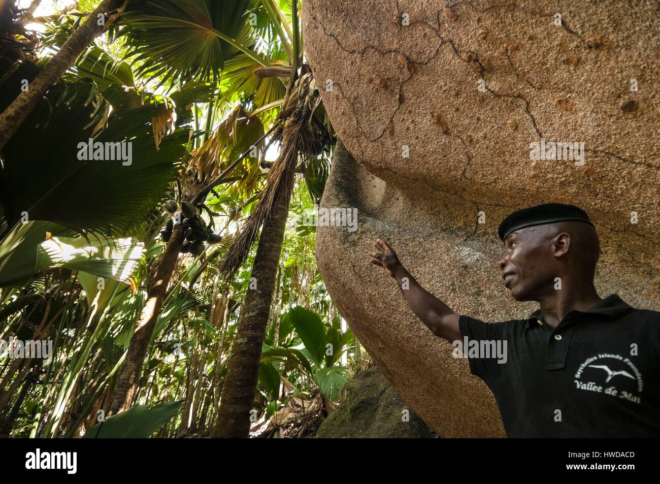Seychelles,la Isla de Praslin, Vallée de Mai National Park, Patrimonio Mundial de la Unesco, el Ranger Andrea Imagen De Stock
