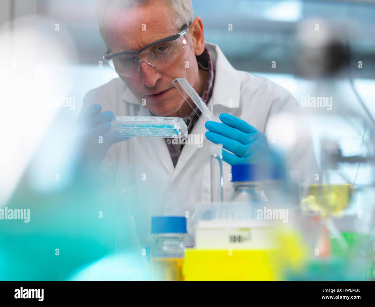 La investigación en biotecnología, el científico ver muestras en una placa de pocillos múltiples Imagen De Stock