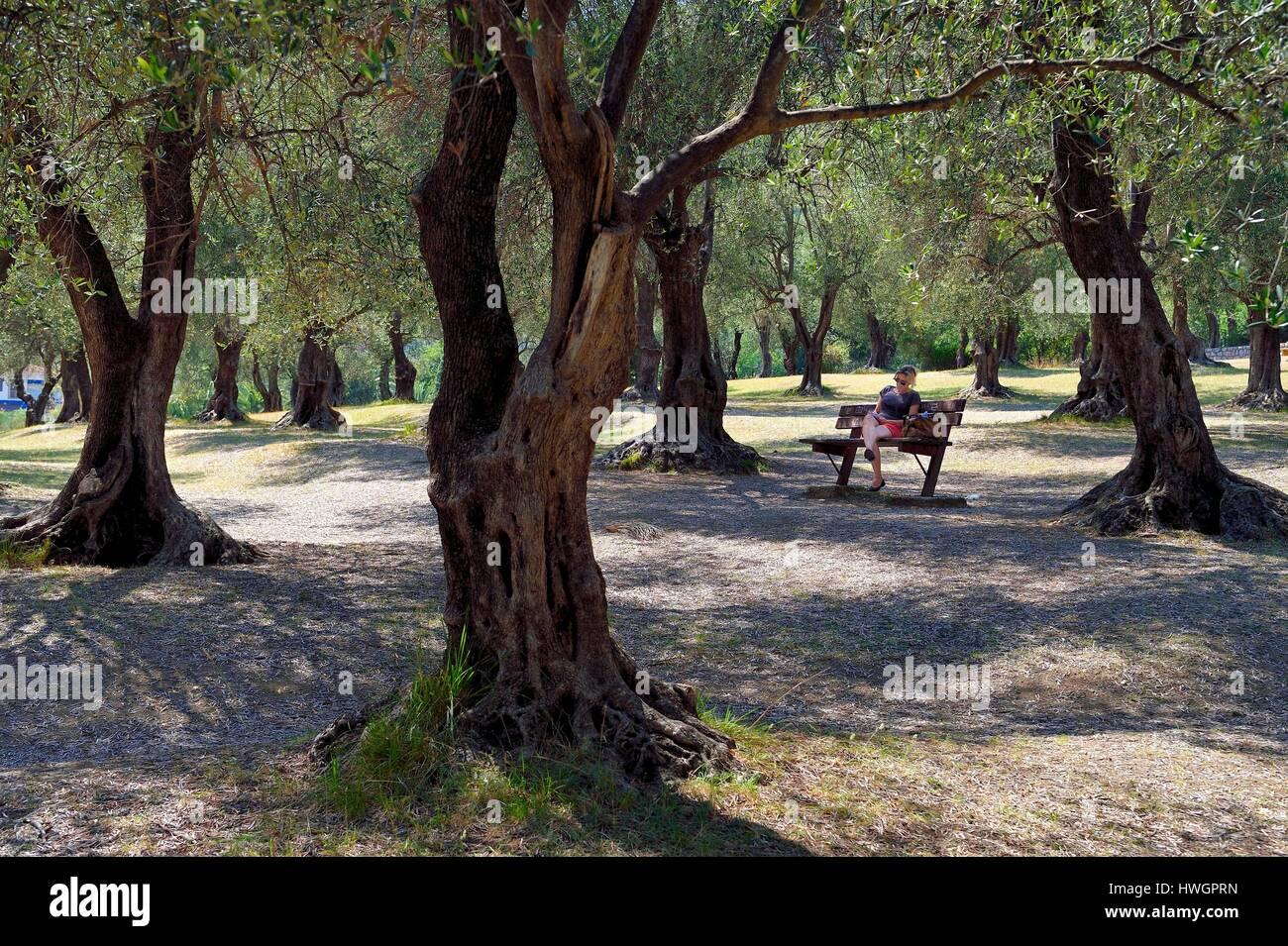 Francia, Alpes Maritimes, Menton, Pian park, tres hectáreas de olivares que alberga más de 530 olivos Foto de stock