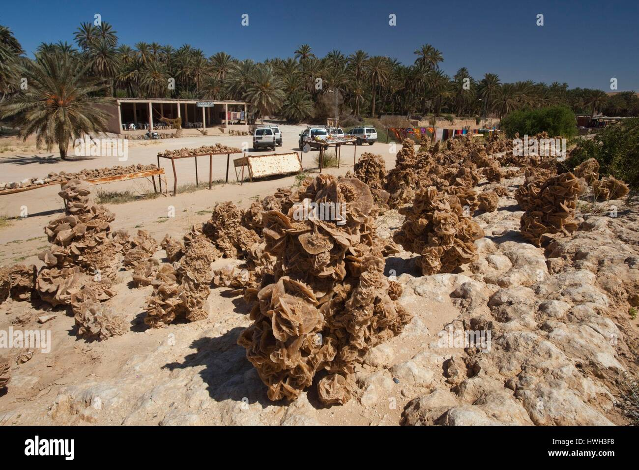 Túnez, la zona Jerid, Gargantas de Selja, mides, souvenir Desert Rose rocas Foto de stock