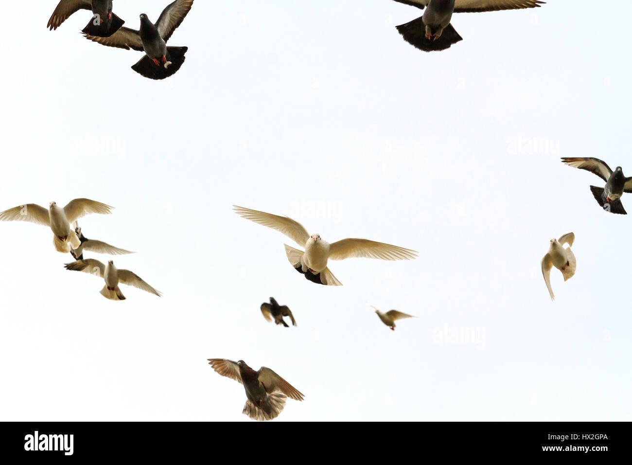 Bandada De Palomas Volando En La Frente Luz Entrega De Correo La