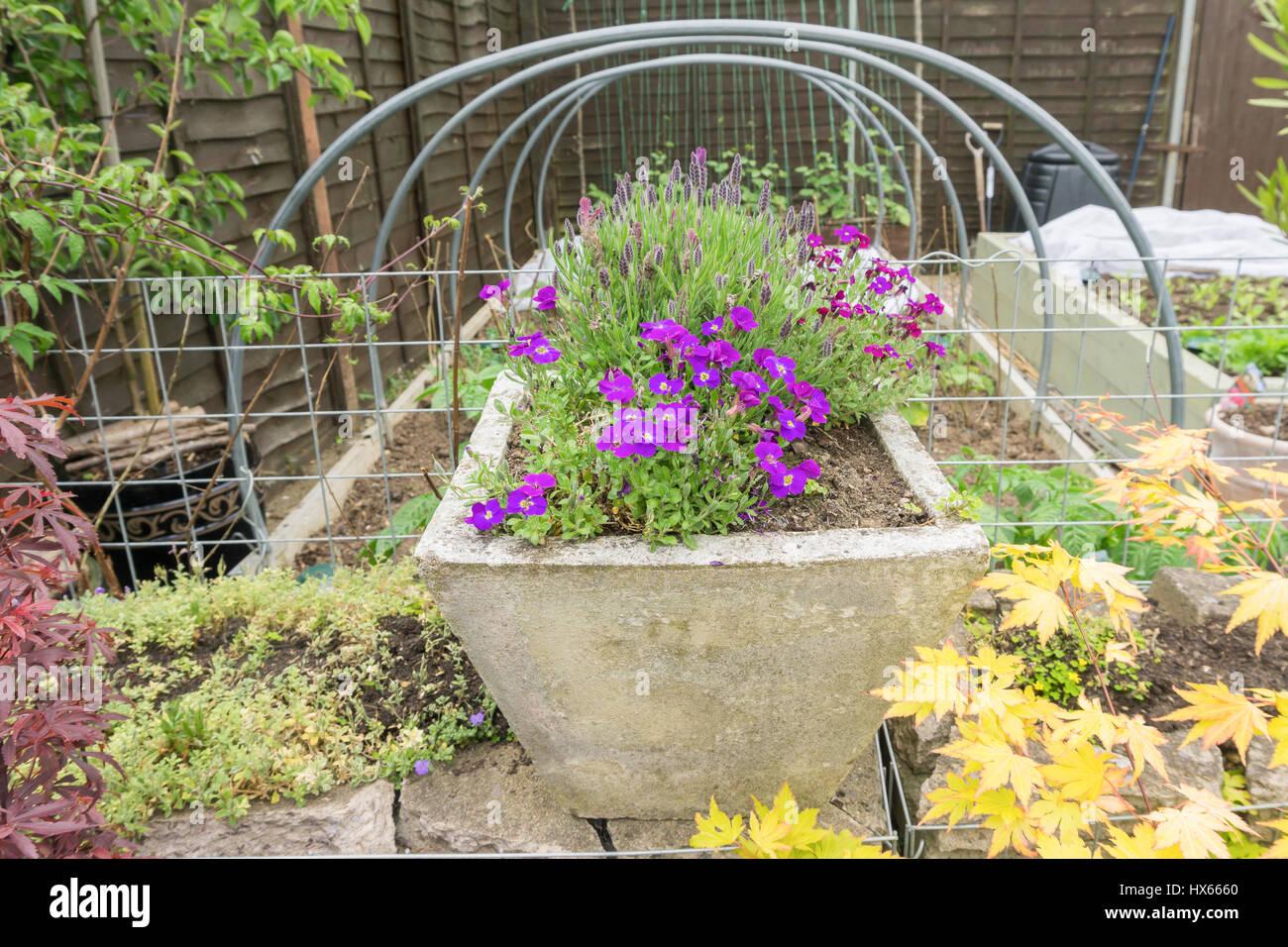 Flores y plantas en un jardín. Imagen De Stock