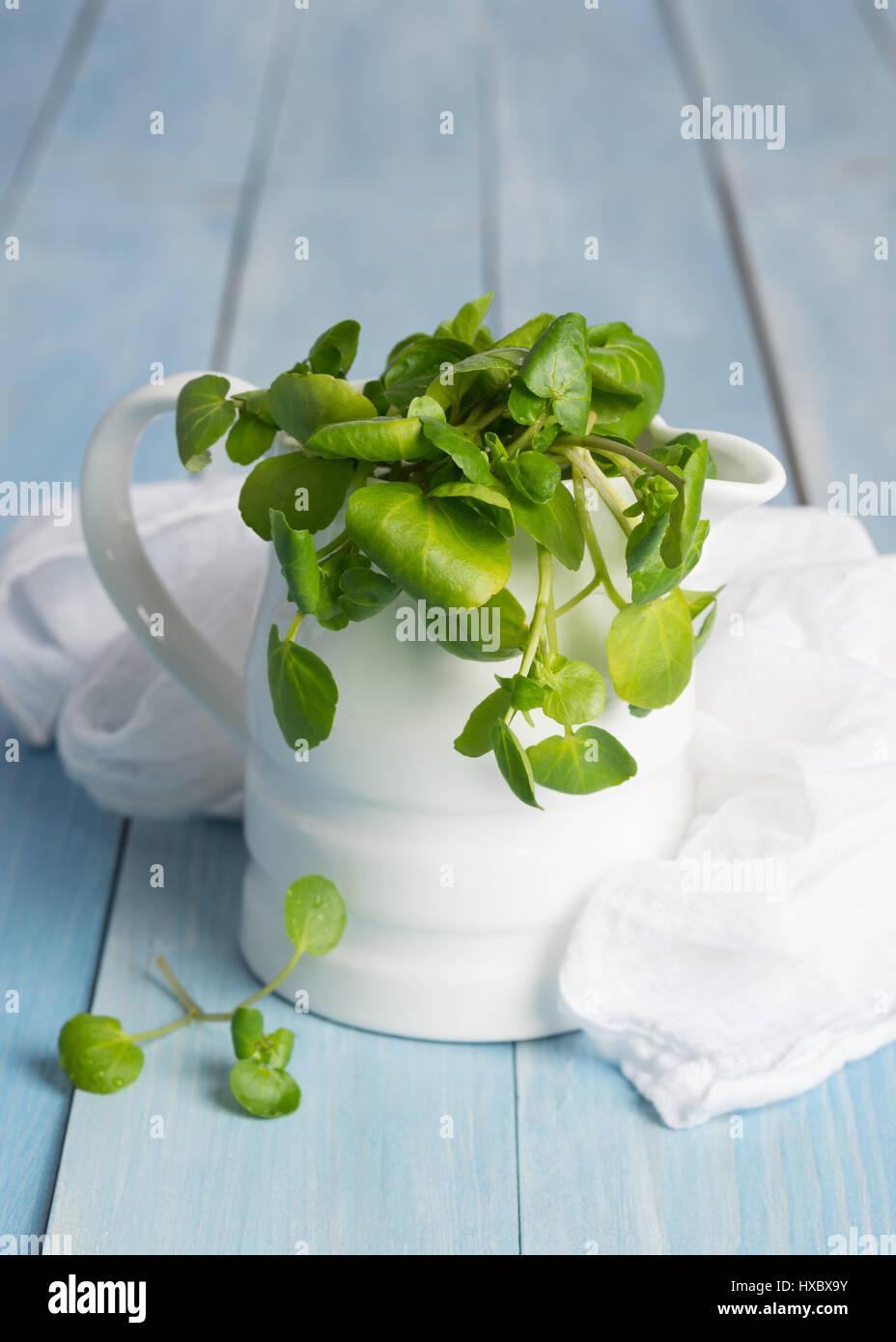 Berro fresco en una jarra con muselina blanca Foto de stock