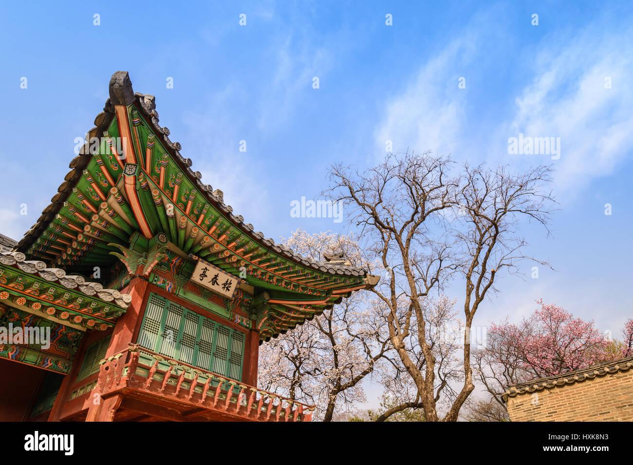 Primavera de los cerezos en flor en el palacio de Changdeokgung, Seúl, Corea del Sur Imagen De Stock