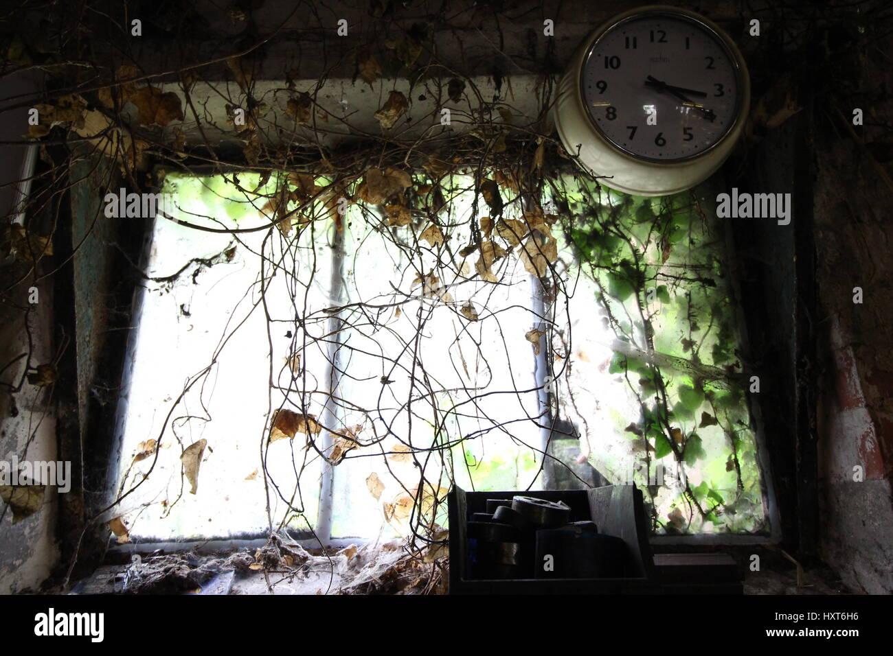 Overgrown Window Imágenes De Stock & Overgrown Window Fotos De Stock ...