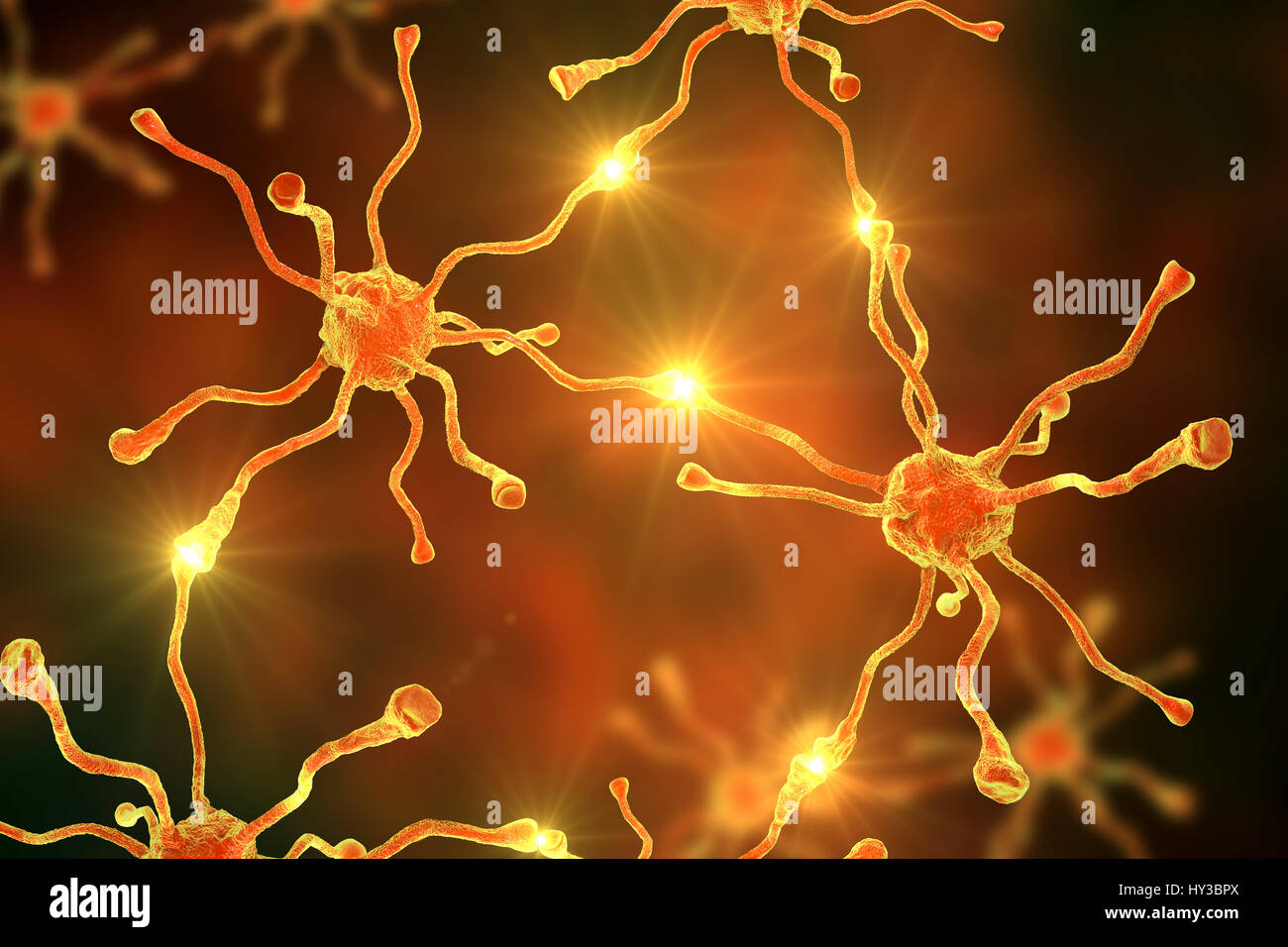 Las células nerviosas, o neuronas, en el cerebro humano, equipo de ilustración. Imagen De Stock