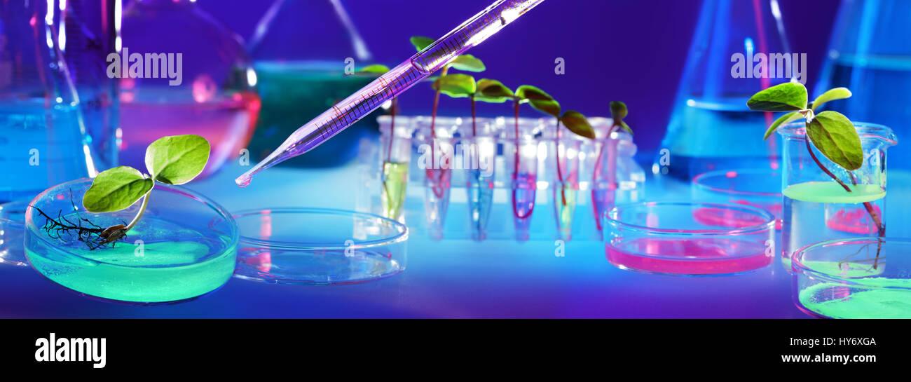 La biotecnología y los OGM - plantas en tubos de ensayo - Laboratorio de Bioquímica Imagen De Stock