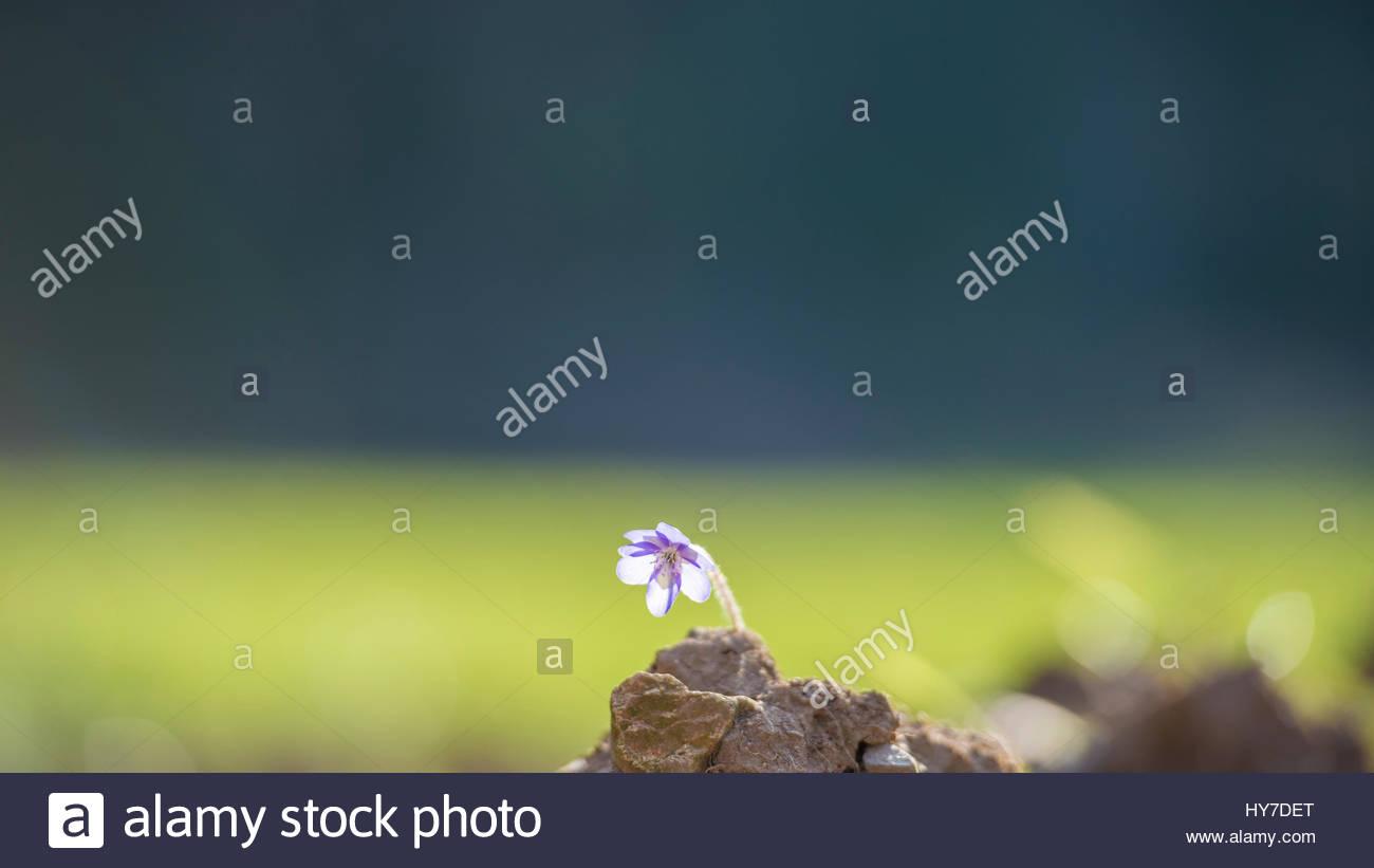 Behind A Rock Imágenes De Stock & Behind A Rock Fotos De Stock - Alamy