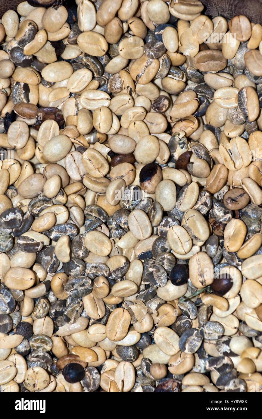Café, granos de café verde - valor nutritivo y contenido antioxidante - Beneficios de Salud - Fondos y Imagen De Stock