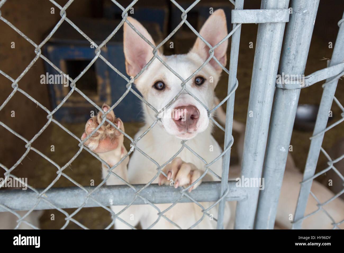 Perros de trineo Foto de stock