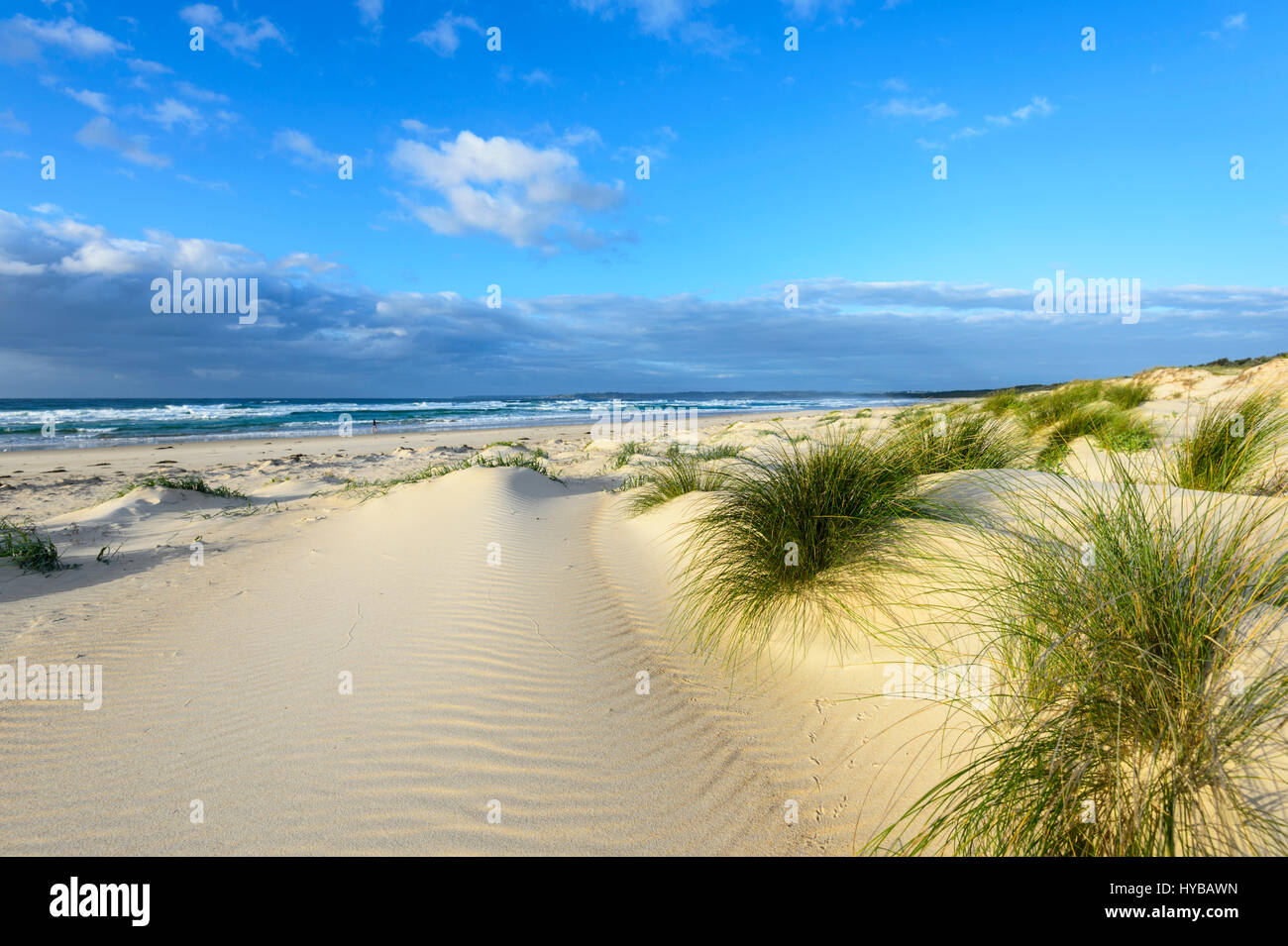 Pintorescas dunas de arena y de hierba en tufts, Shoalhaven Conjola Playa, Costa Sur, Nueva Gales del Sur (NSW, Foto de stock