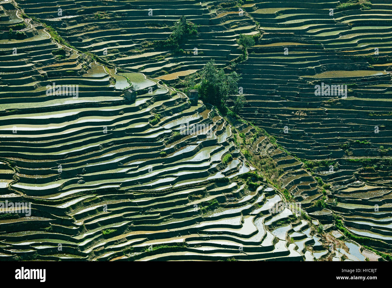 Campo De Arroz Terraza Yunnan China Foto Imagen De Stock