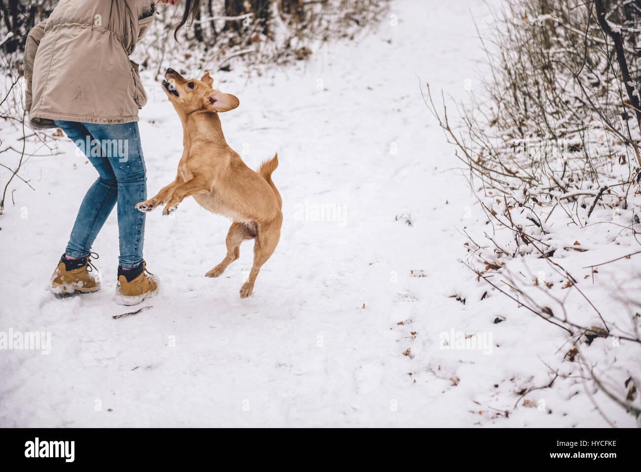 Chica senderismo en el bosque de invierno blanco con perro Imagen De Stock