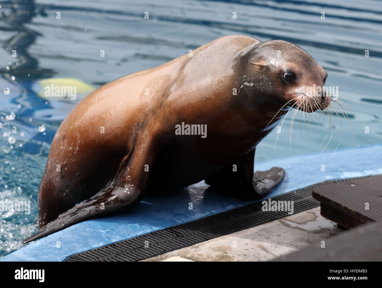 Excepcional Anatomía Del León De Mar Embellecimiento - Imágenes de ...