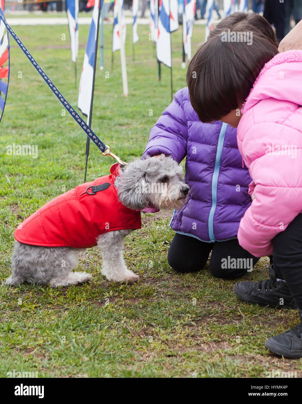 Los niños pequeños de acariciar a un perro - EE.UU. Imagen De Stock