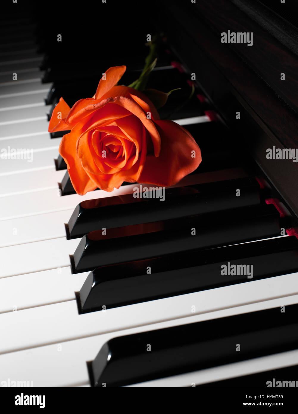 Teclas del piano de cerca con rosa Foto de stock
