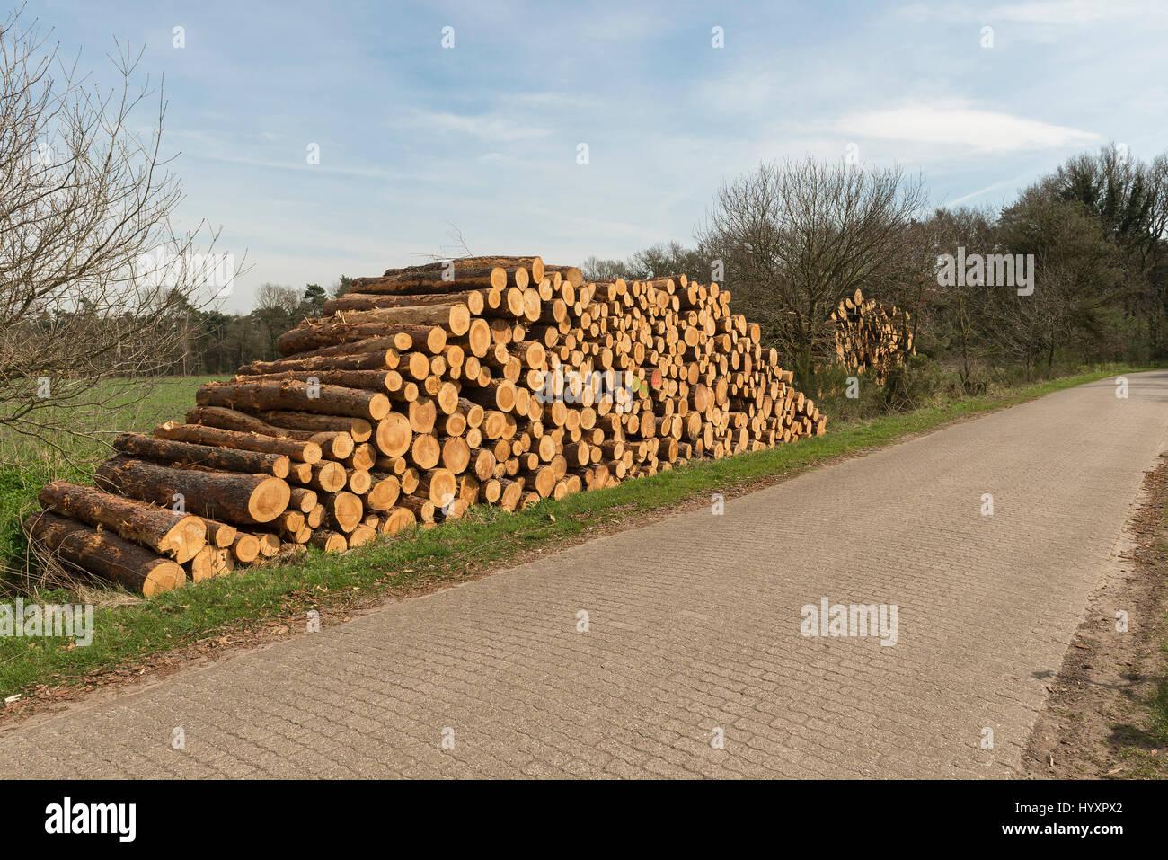 Aserrado de troncos apilados en el lado de la carretera con los iconos de advertencia contra ascender en los Países Foto de stock