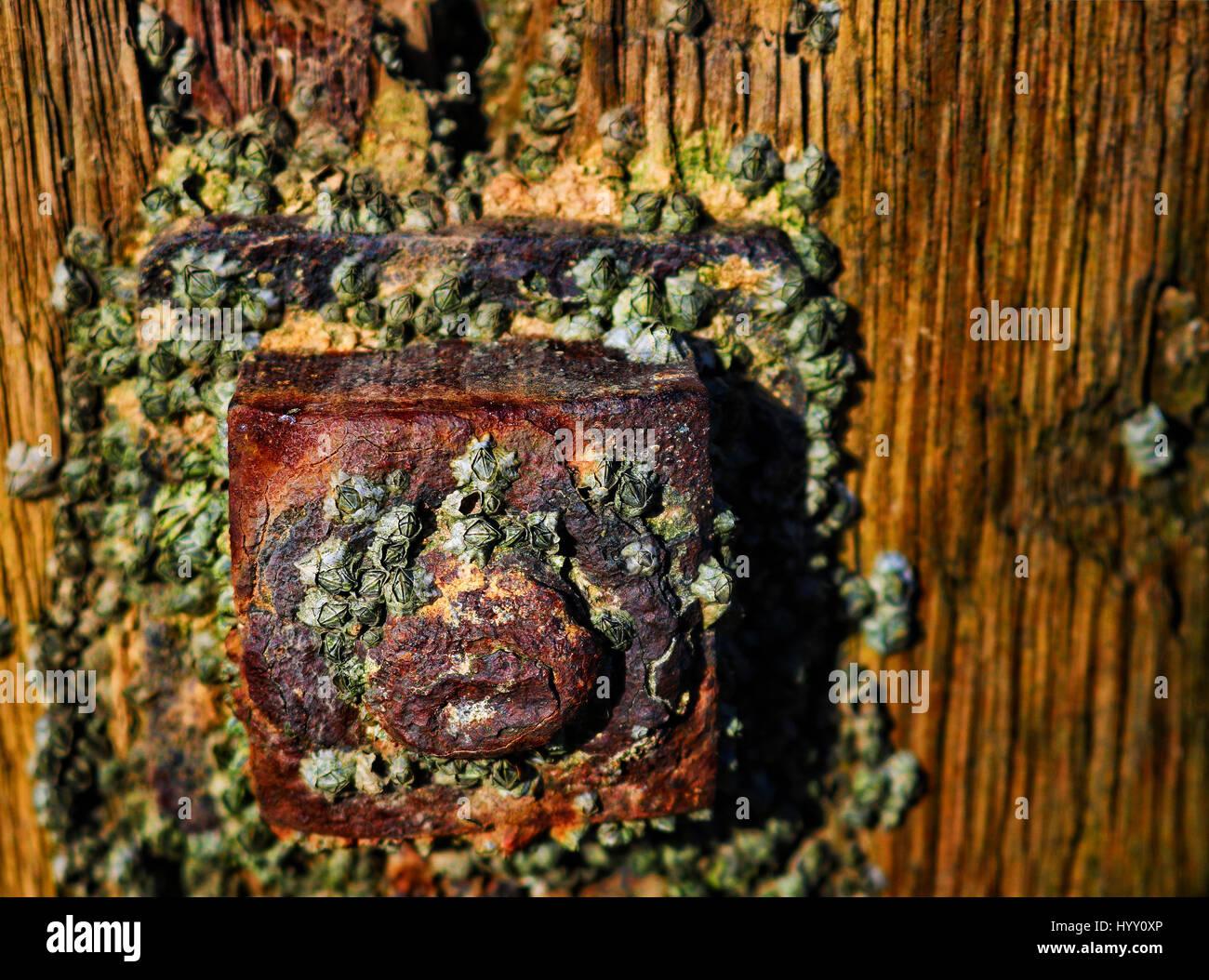 Tornillo oxidado Foto de stock