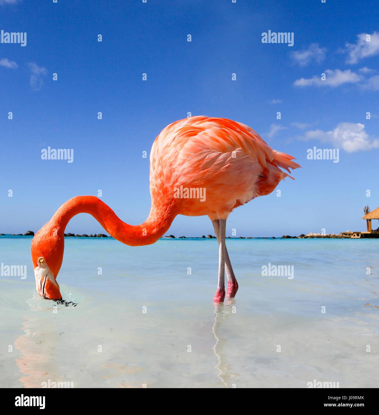 Las mejores playas de Aruba: Playa Flamingo del Hotel Renaissance Foto de stock