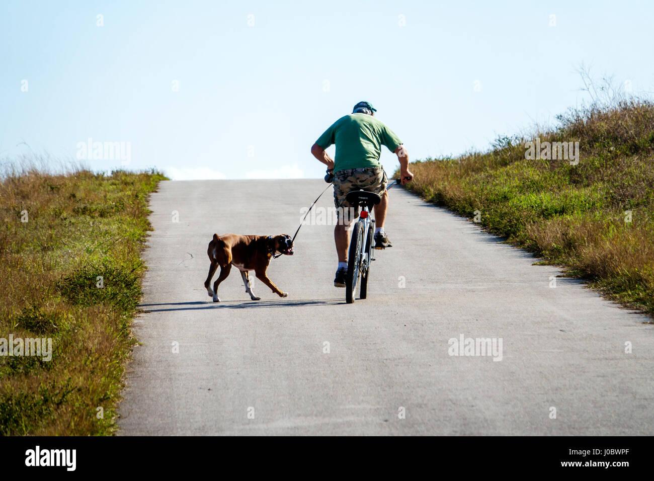 El lago Okeechobee Florida park trail ruta hombre correa perro bicicleta pedaleando cuesta arriba tirón Imagen De Stock