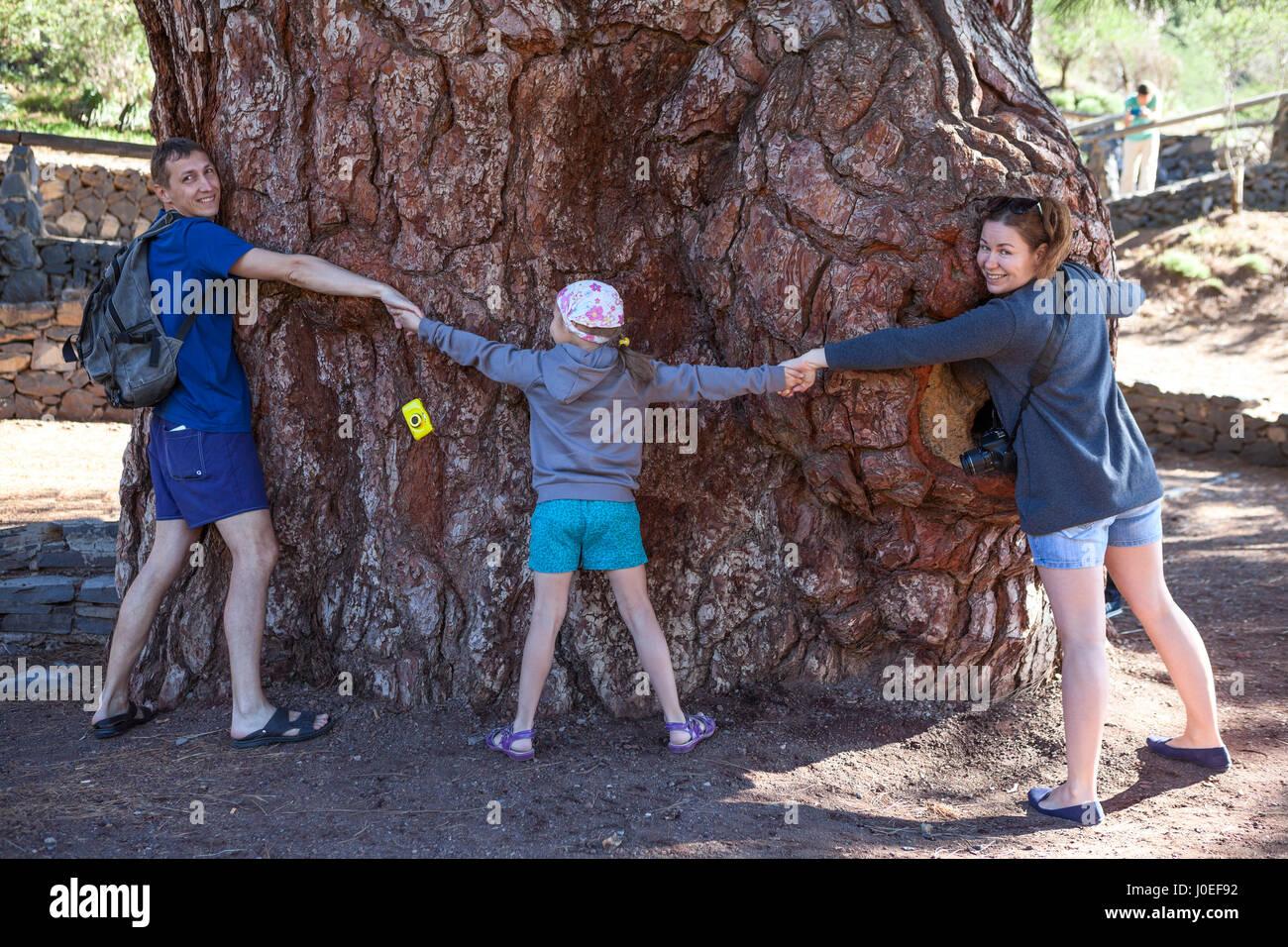 Papá, Mamá e hija abrazando todos juntos con las manos el pino gigante en Vilaflor. Tenerife, Islas Canarias, España Foto de stock