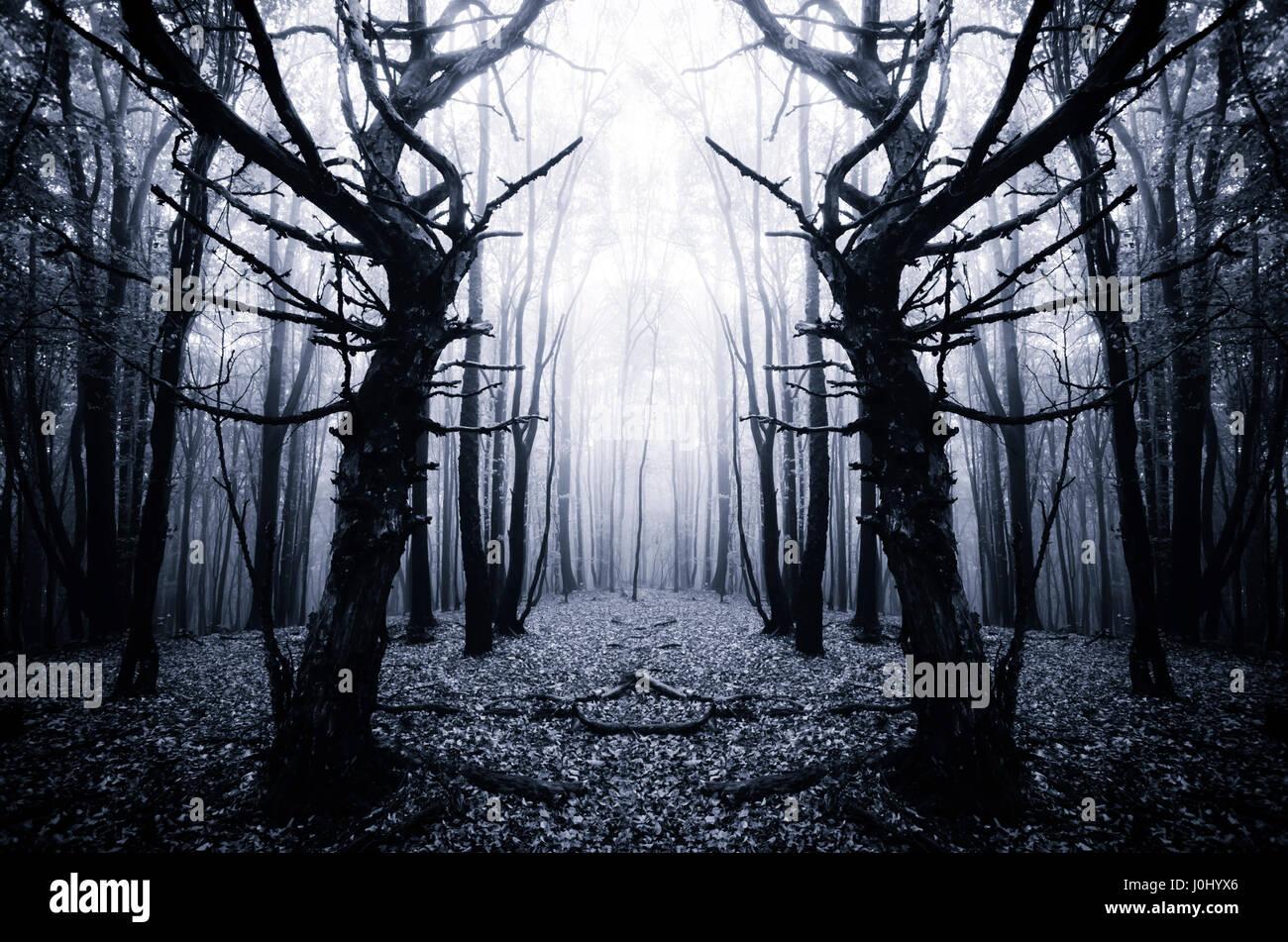 Scary Viejos Arboles En Un Bosque Oscuro Fotografia De Stock Alamy