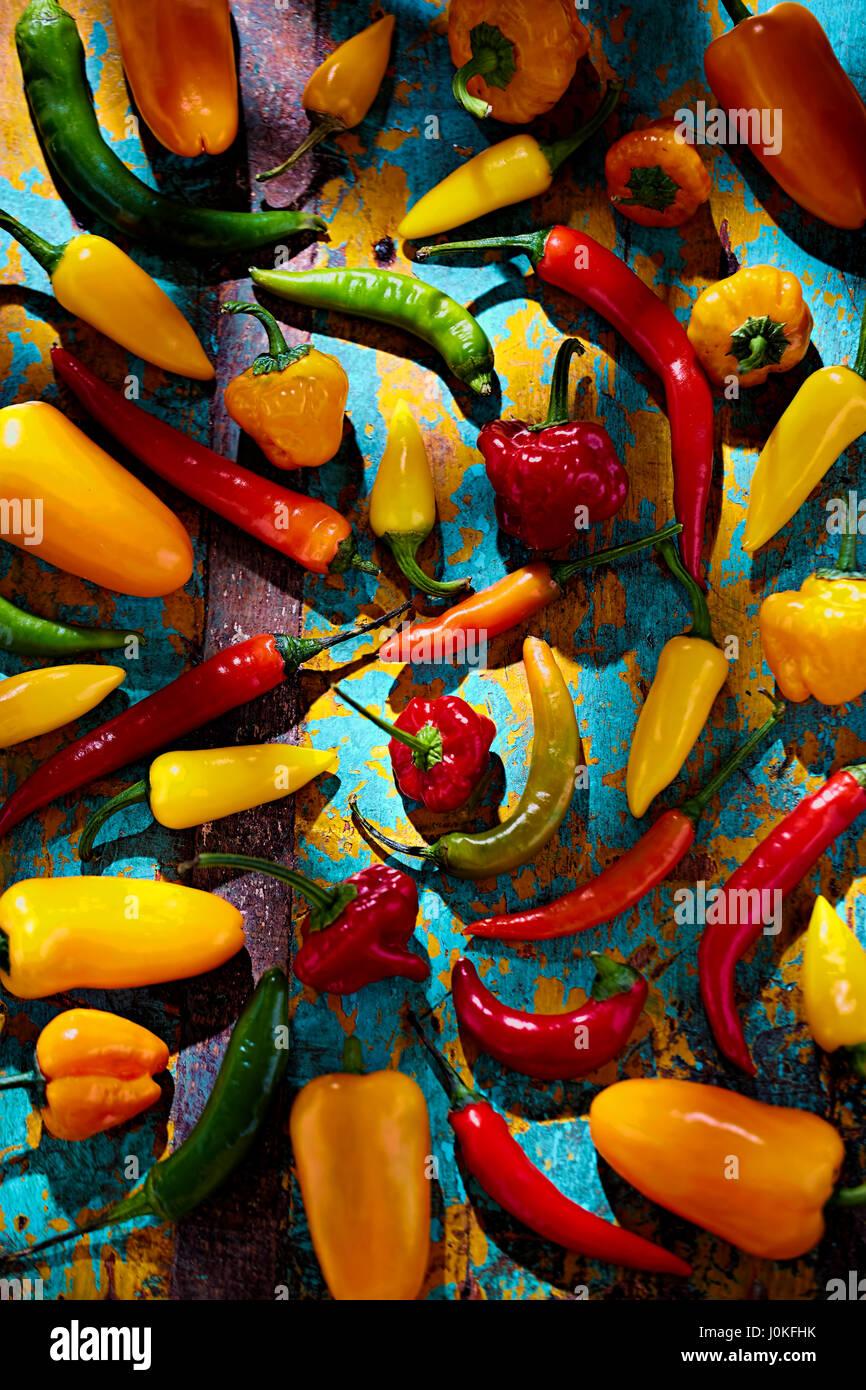 Verde, rojo, amarillo y naranja pimientos sobre fondo azul. Foto de stock