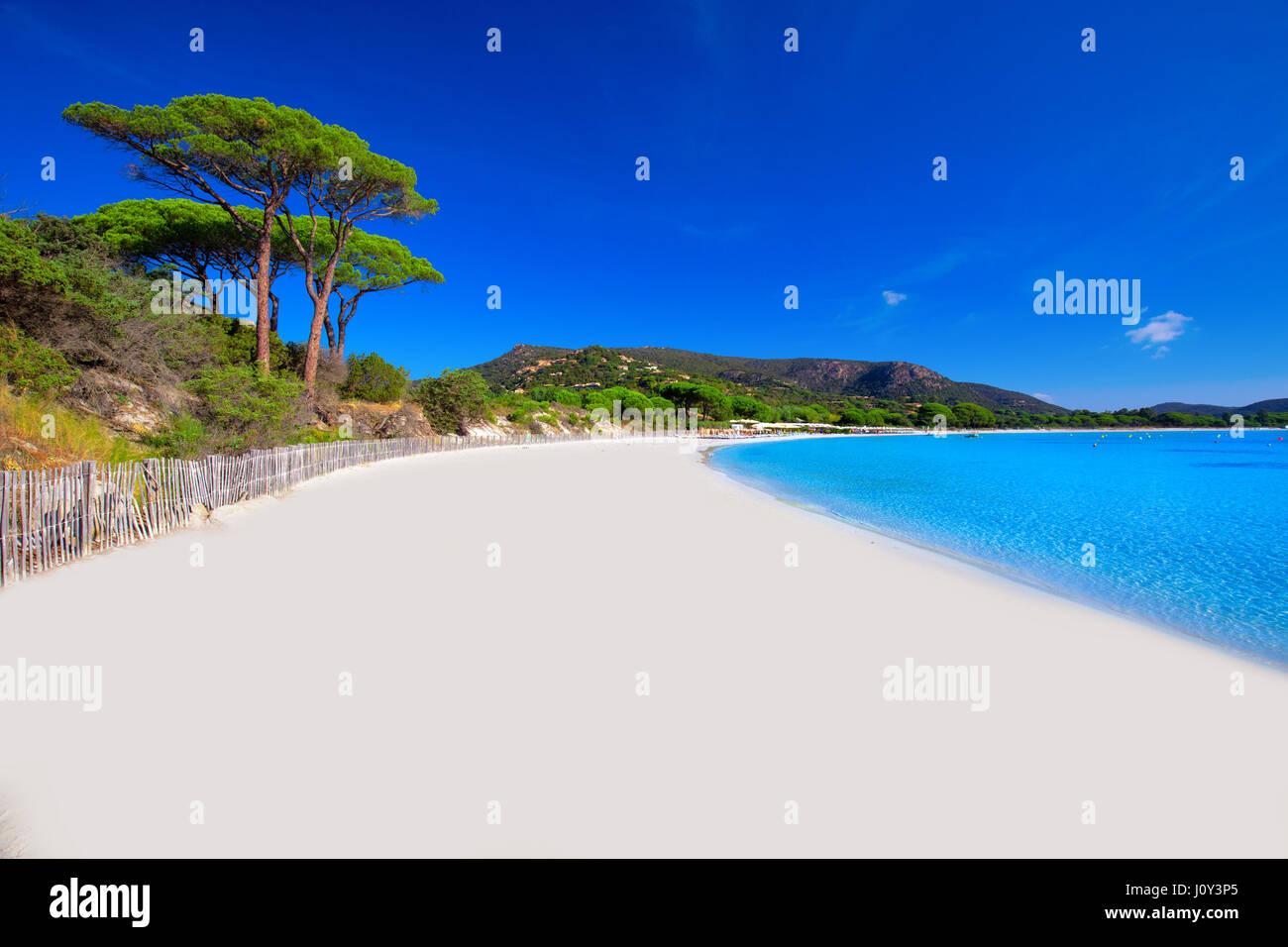 Playa de Palombaggia con pinos y claras aguas azules, Córcega, Francia, Europa. Foto de stock