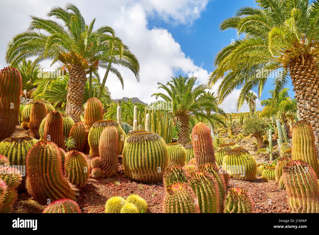 Jardín de Cactus, Gran Canaria, España Foto de stock