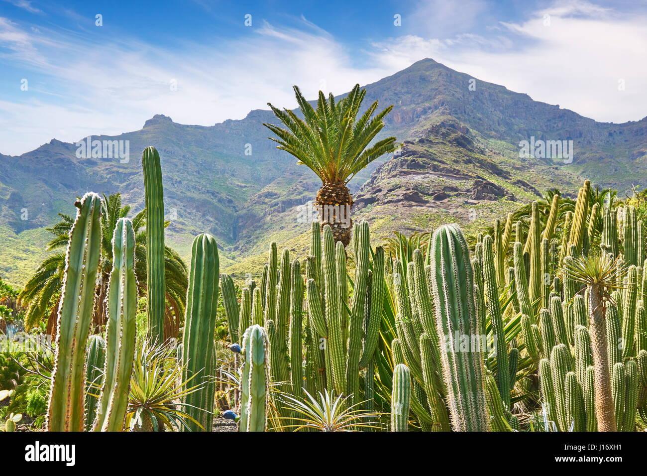 Jardín de Cactus paisaje, Gran Canaria, España Imagen De Stock