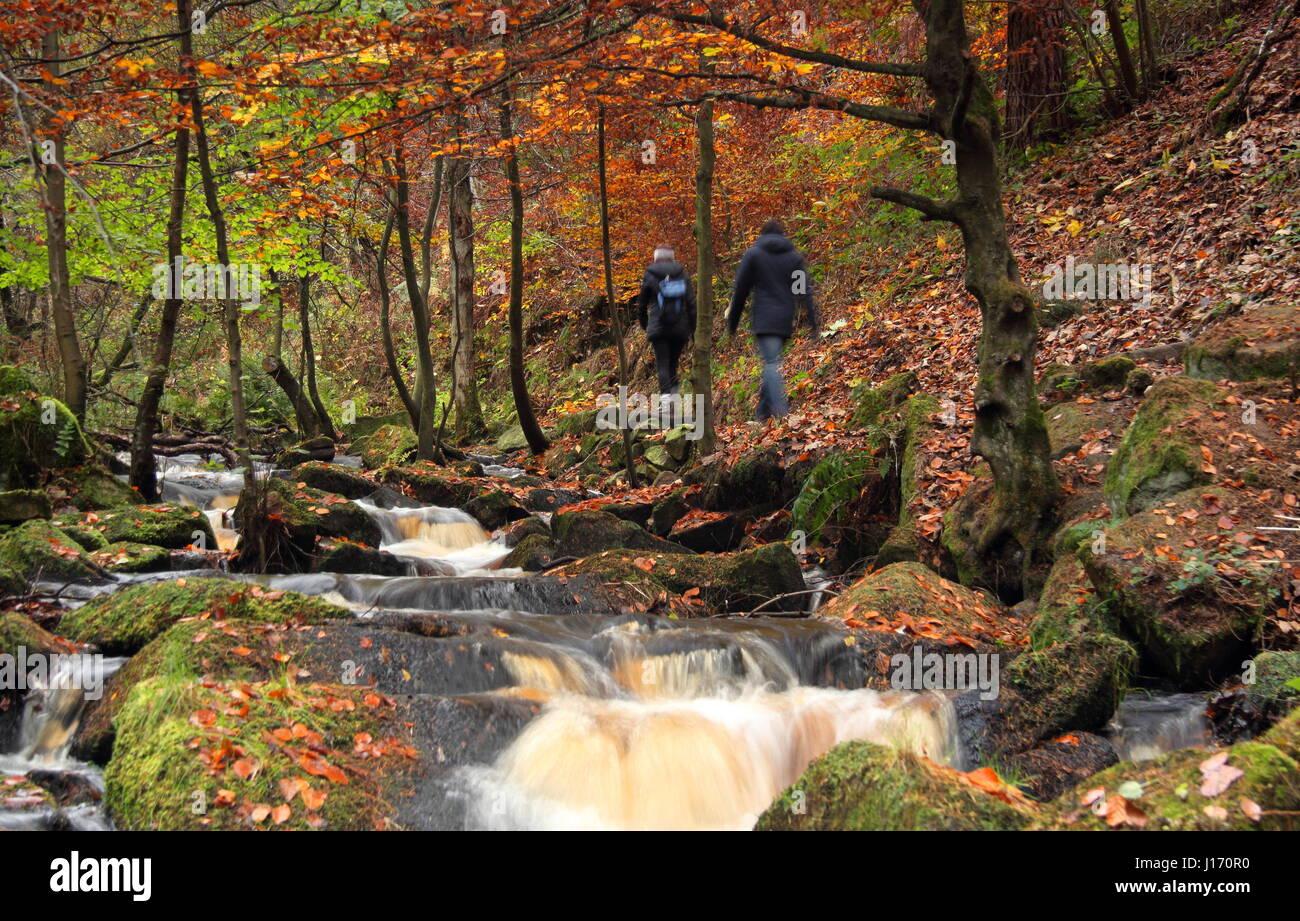 Caminantes en un sendero rodeado de follaje de otoño impresionantes en el pintoresco arroyo Wyming reserva natural Foto de stock