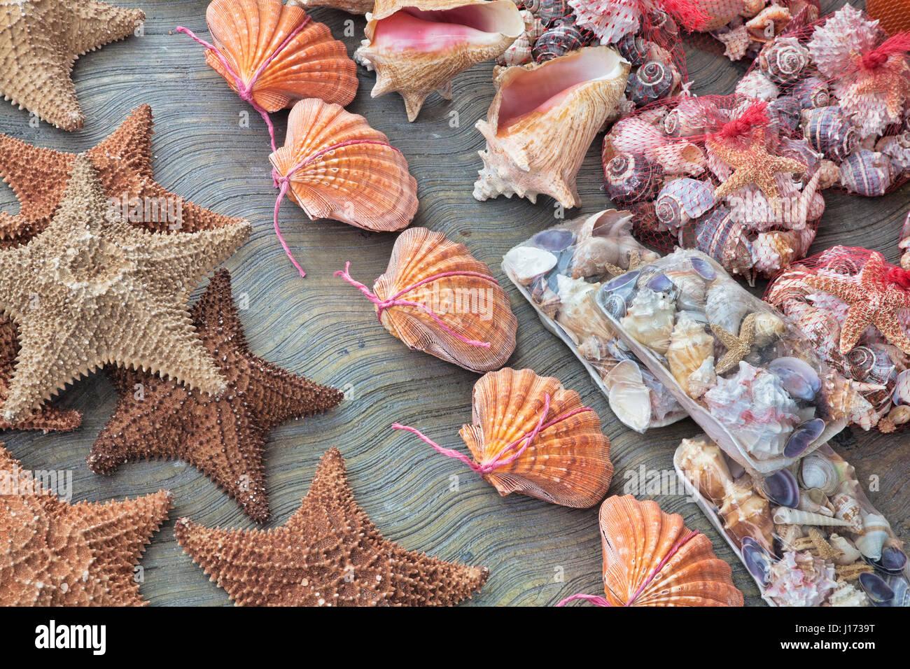 Hermoso recuerdo conchas para vender en Cancún México Foto de stock