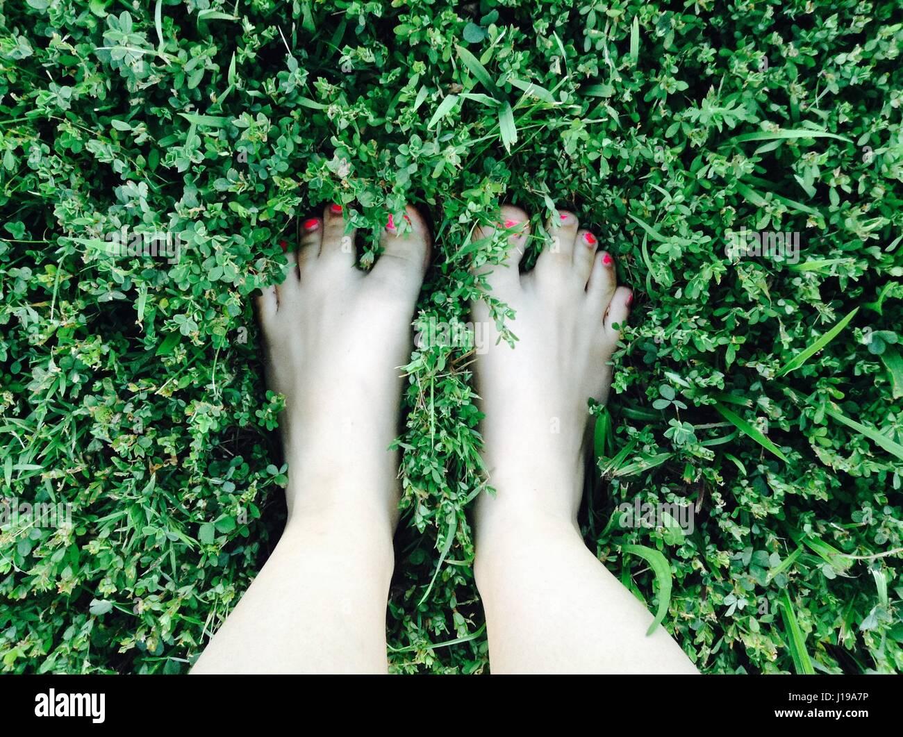Let\'s Go green! . Me encanta cómo la rosa salpicado en la ...