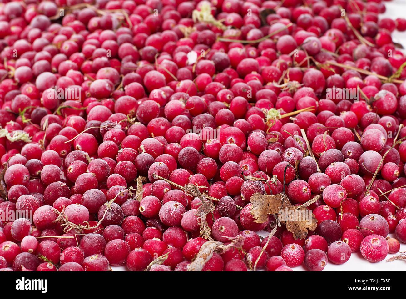 Es un montón de dispersas congelados bayas cowberry Imagen De Stock
