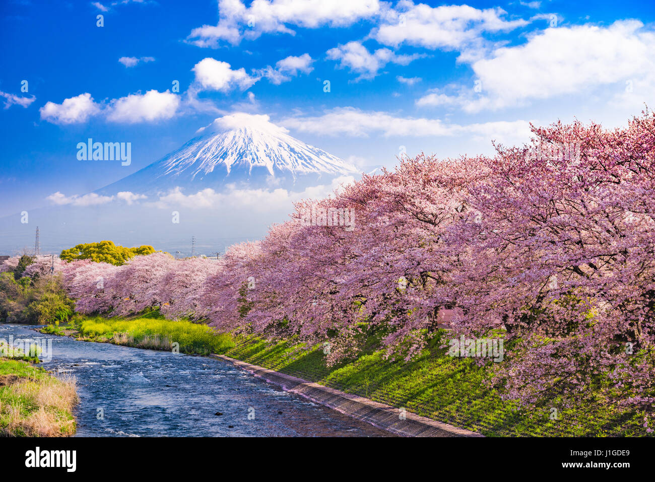 Mt. Fuji, Japón y río en primavera. Imagen De Stock