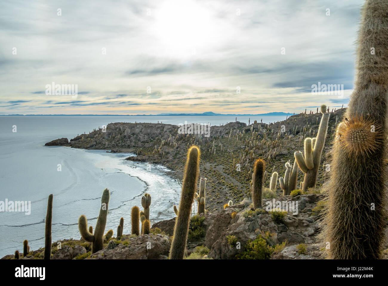 Cactus Isla Incahuasi en Salar de Uyuni salar - El Departamento de Potosí, Bolivia Imagen De Stock