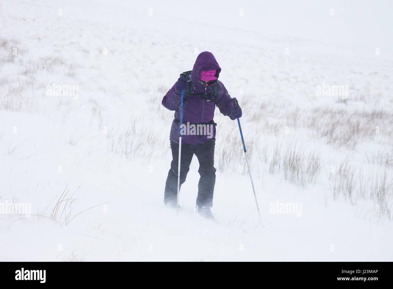 Esquí de travesía en condiciones de Blizzard en Los Peninos del Norte, asiento Burnhope, Cumbria Reino Unido Foto de stock