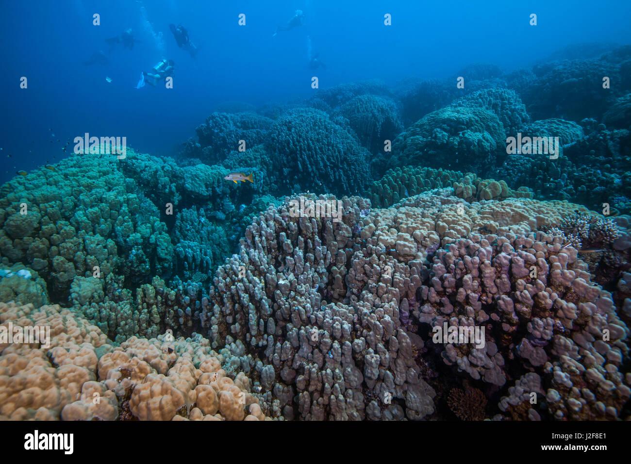 Los submarinistas exploran prístina coloridos arrecifes de coral en el Mar Rojo se extiende más allá de los ojos pueden ver. Puerto Ghalib, Egipto. Foto de stock