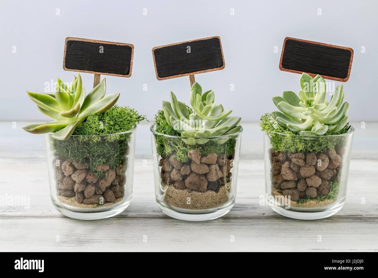 precioso regalos para los invitados a la boda con plantas suculentas en recipientes de vidrio. Black Bedroom Furniture Sets. Home Design Ideas