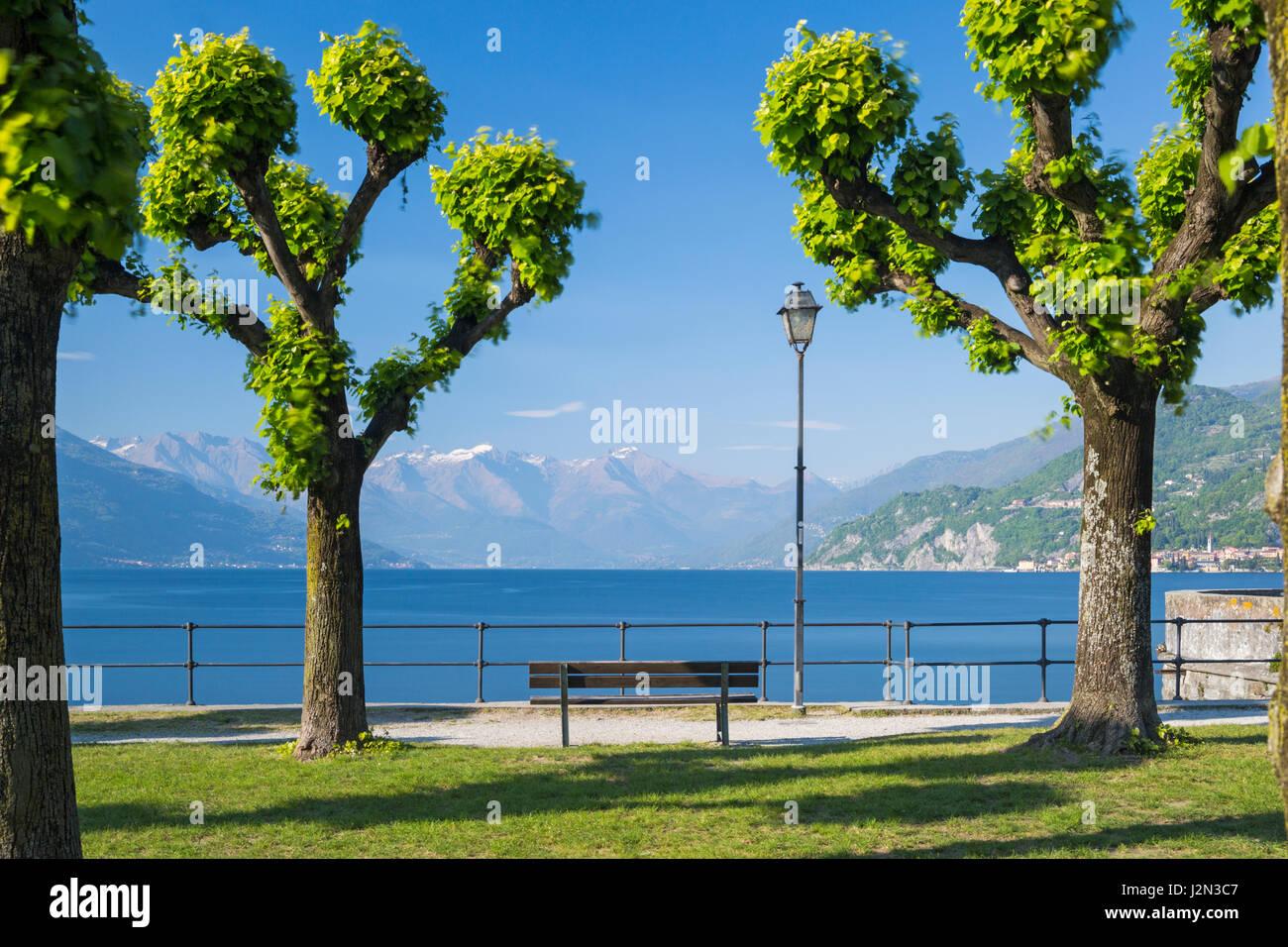 A lo largo de árboles talados costanera arbolada en el Bellagio, el Lago de Como, Italia en abril Foto de stock