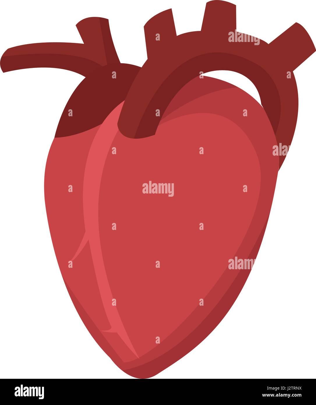 Icono cardio corazón humano sano Imagen De Stock
