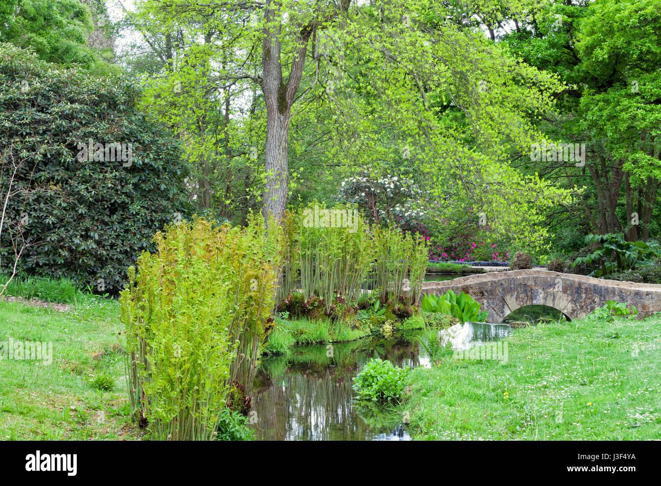 Jard n con un viejo puente de piedra sobre un peque o r o for Arbustos jardin pequeno