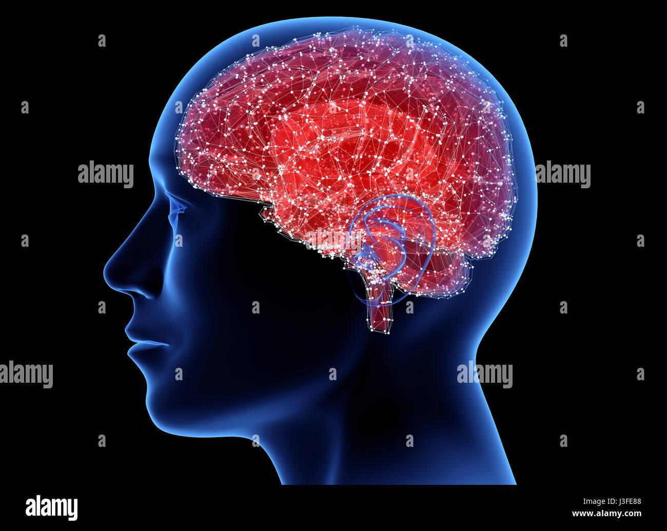 Cabeza de hombre con el cerebro. Ilustración 3D Imagen De Stock