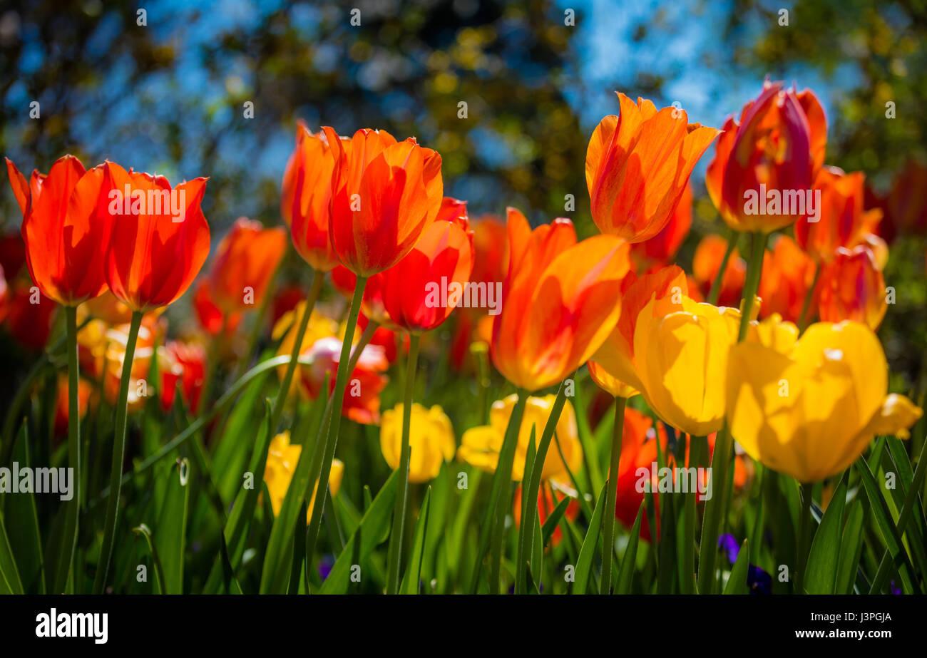 El Dallas Arboretum and Botanical Garden es un jardín botánico de 66 acres situado en 8617 Garland Road Imagen De Stock