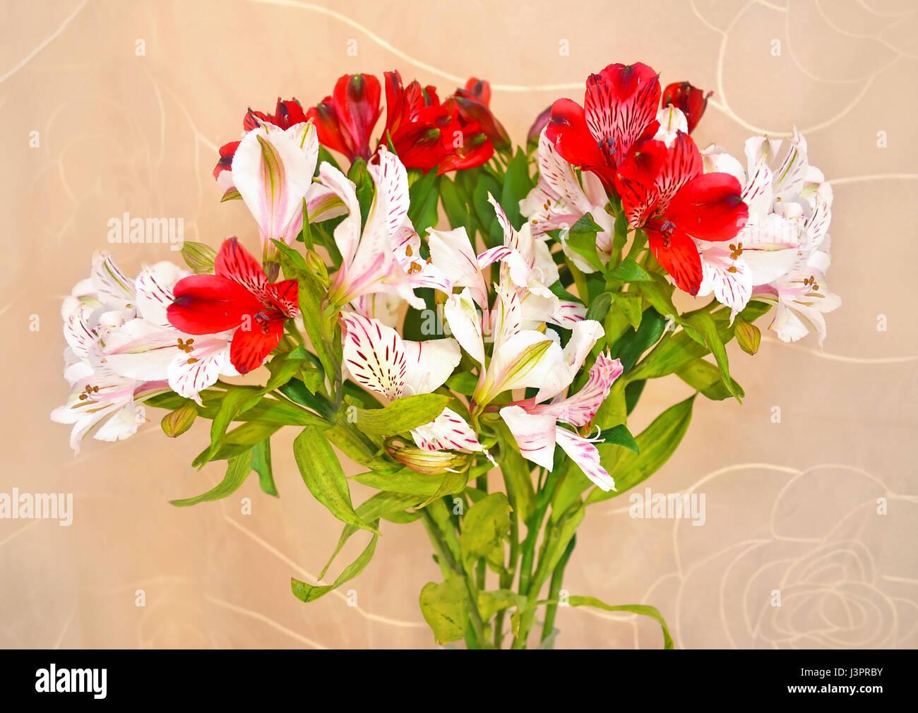 Astromelias Flores Rojas Y Blancas Foto Imagen De Stock