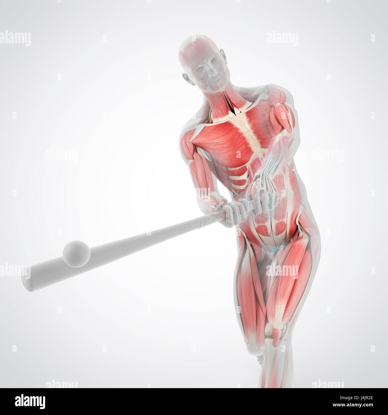 Estructura de la anatomía de un jugador de béisbol, la ilustración ...