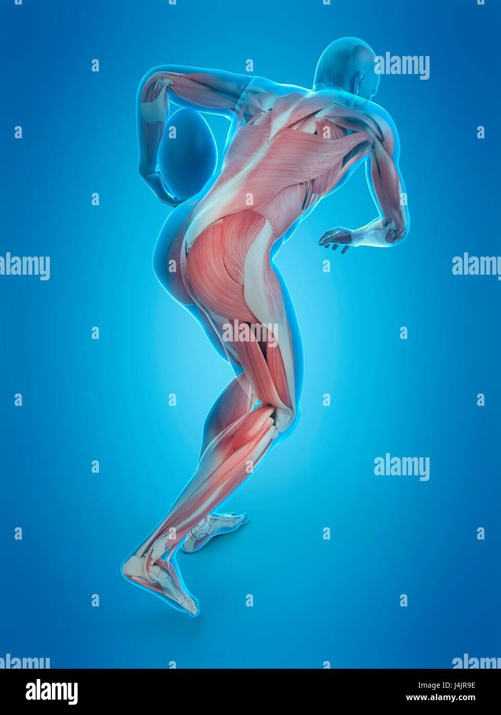 Estructura muscular de jugador de rugby, ilustración. Imagen De Stock