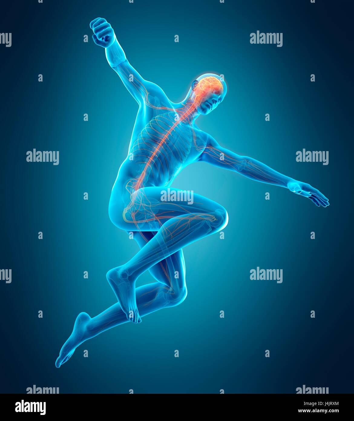 Anatomía de la persona saltando con los brazos extendidos, la ...
