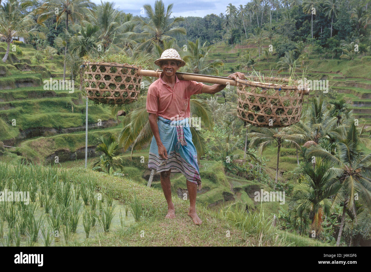 Indonesia Viajes Campos Hombre Tragekörbe Ningún Modelo